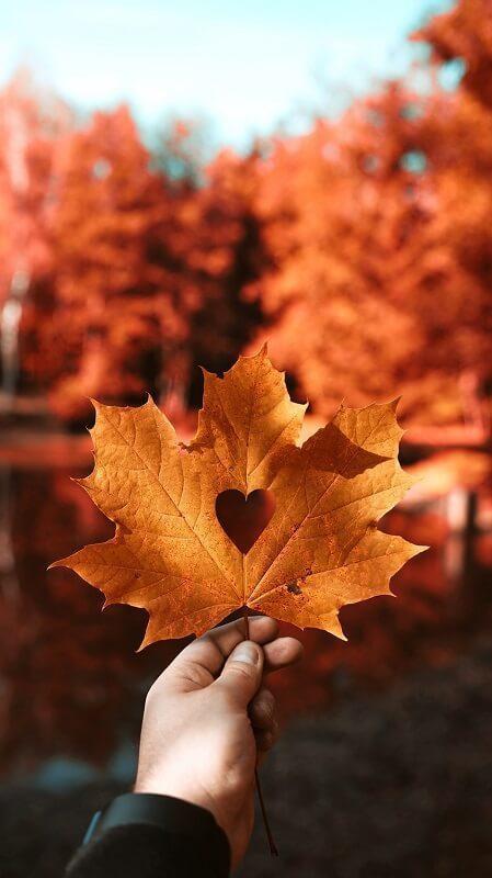 Красивые фото про осень (21)