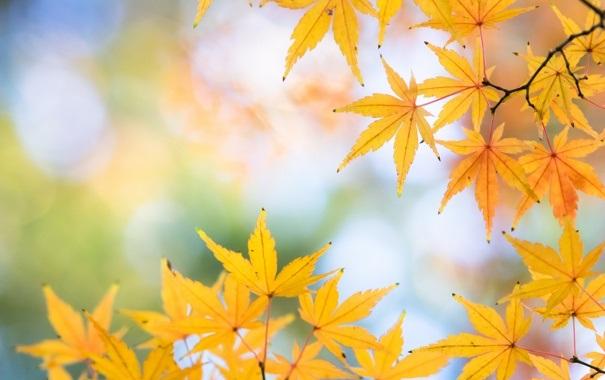 Красивые фото про осень (22)