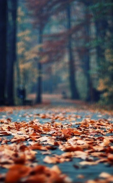 Красивые фото про осень (23)