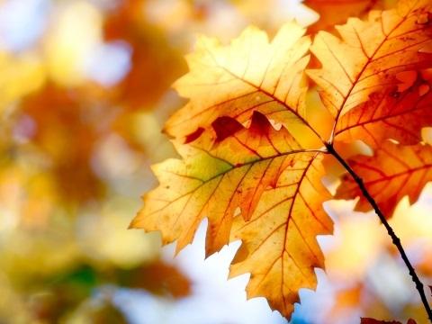 Красивые фото про осень (24)