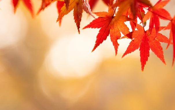Красивые фото про осень (25)