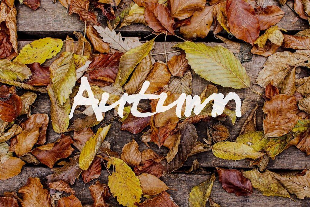 Красивые фото про осень (26)