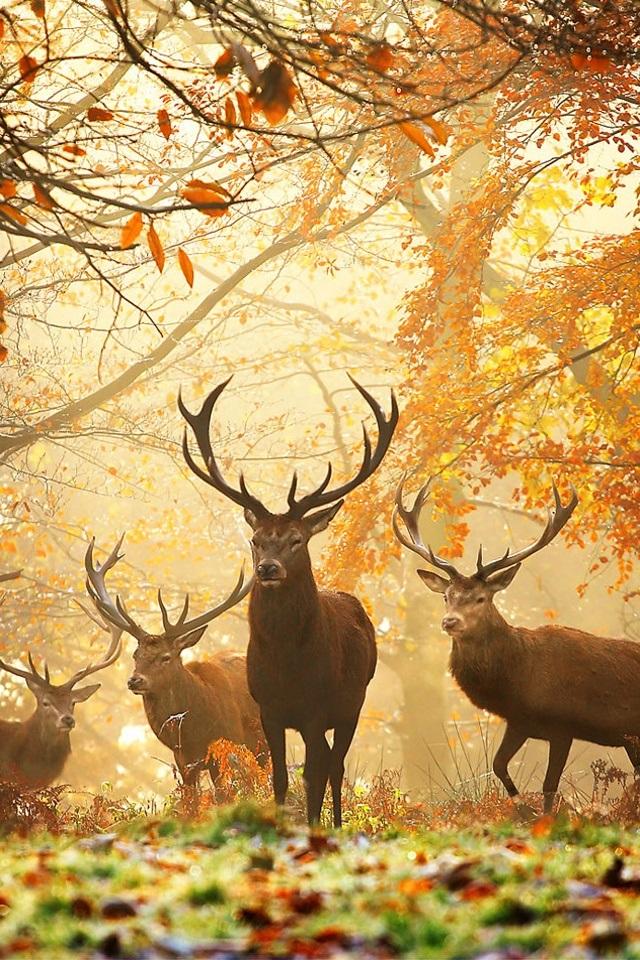 Красивые фото про осень (27)