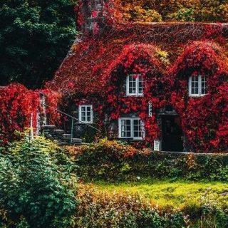 Красивые фото про осень (3)