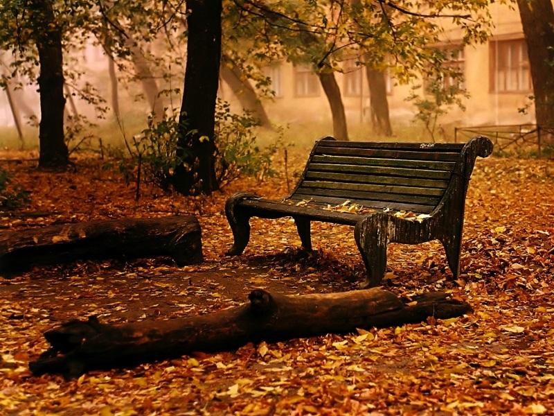 Красивые фото про осень (4)