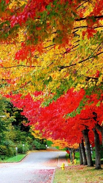 Красивые фото про осень (9)