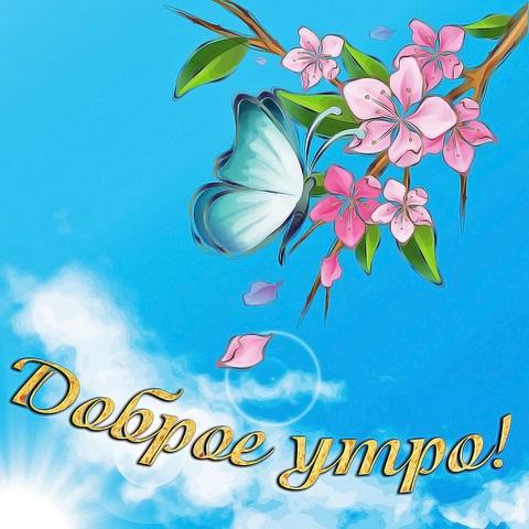 Милые картинки бабочки доброе утро (1)