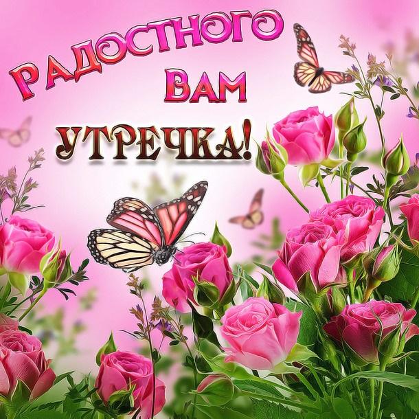 Милые картинки бабочки доброе утро (12)