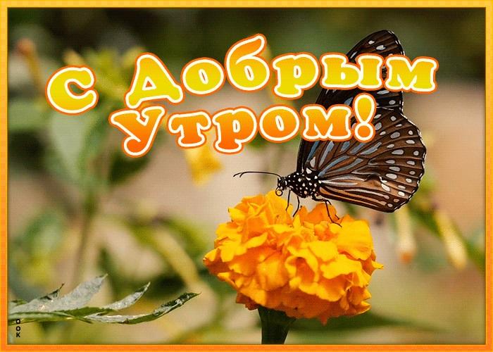 Милые картинки бабочки доброе утро (13)