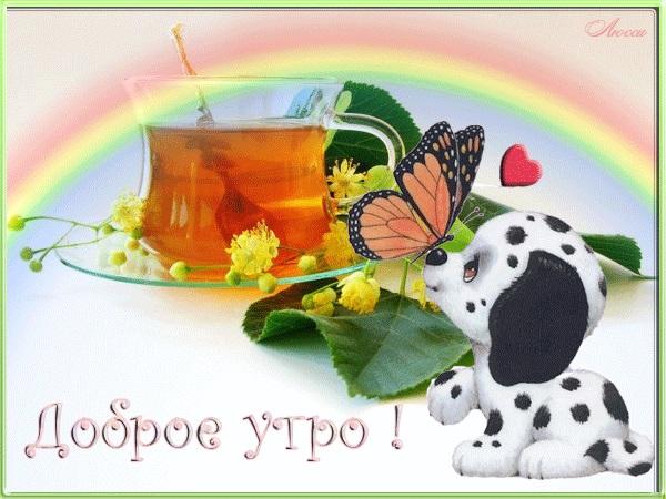 Милые картинки бабочки доброе утро (16)