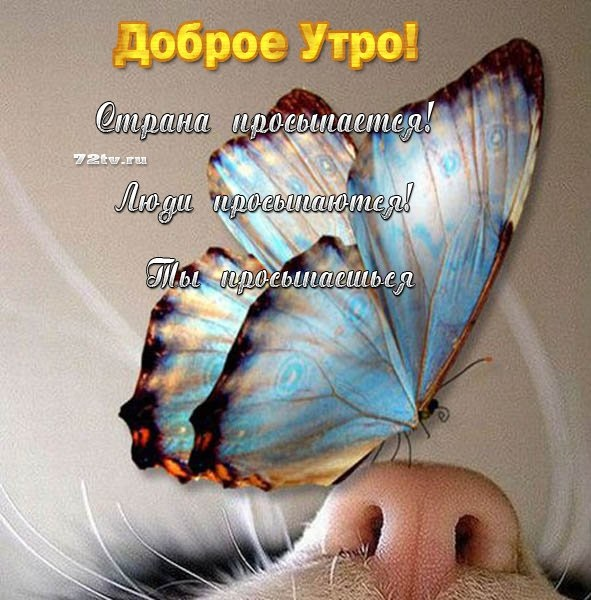 Милые картинки бабочки доброе утро (17)