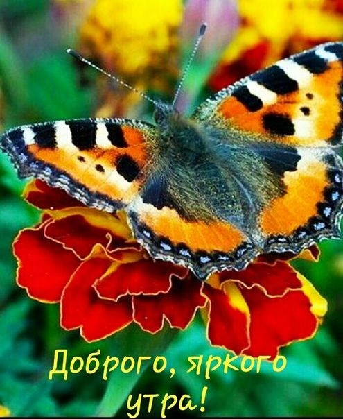Милые картинки бабочки доброе утро (19)
