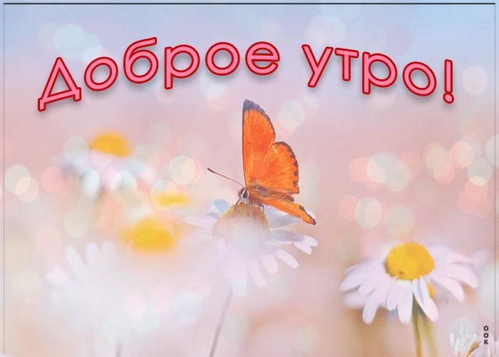 Милые картинки бабочки доброе утро (21)