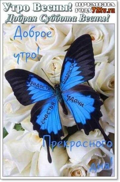 Милые картинки бабочки доброе утро (23)