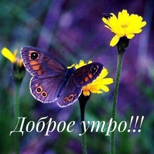 Милые картинки бабочки доброе утро (4)