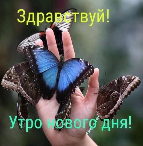 Милые картинки бабочки доброе утро (6)