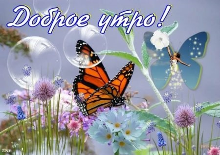 Милые картинки бабочки доброе утро (7)