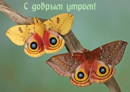 Милые картинки бабочки доброе утро (8)