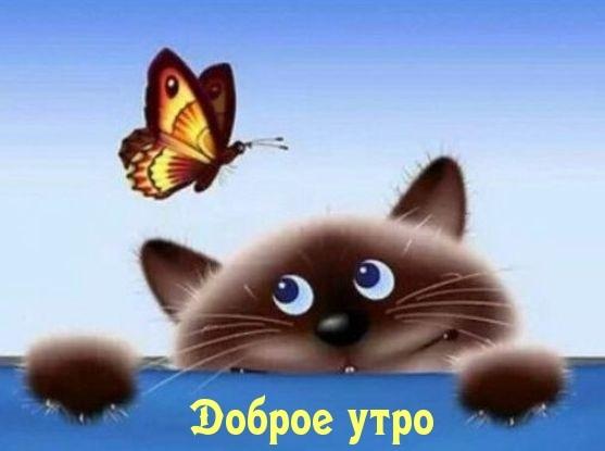 Милые картинки бабочки доброе утро (9)