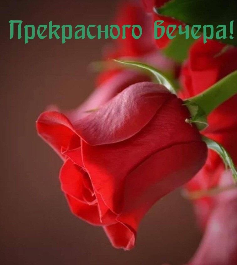 Милые картинки на добрый вечер (1)