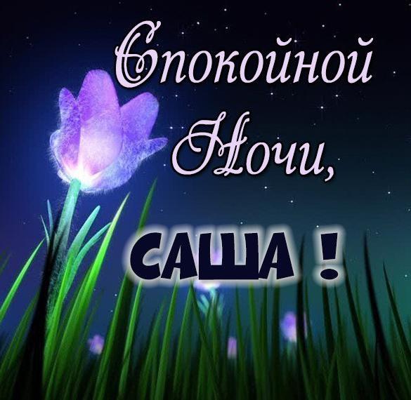 Спокойной ночи Саша картинки (10)