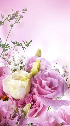 Цветы красивые картинки живые (1)