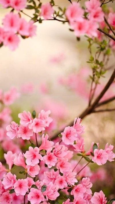 Цветы красивые картинки живые (12)