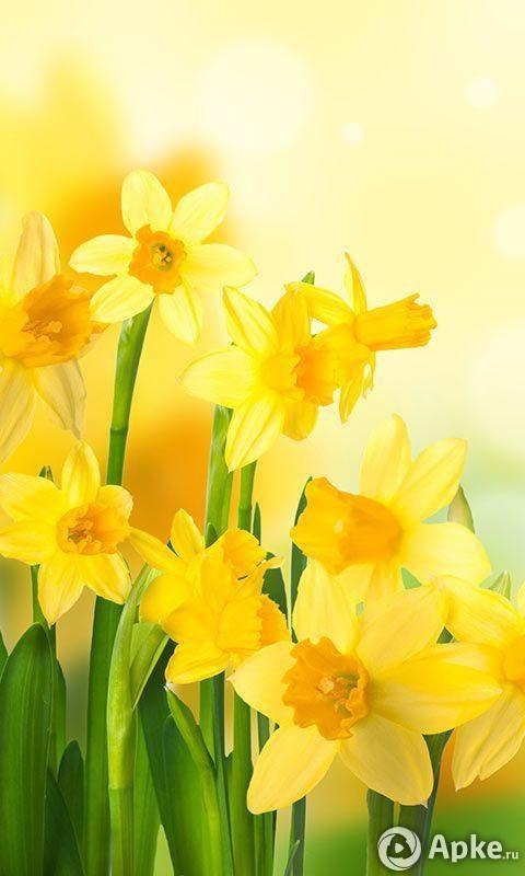 Цветы красивые картинки живые (13)