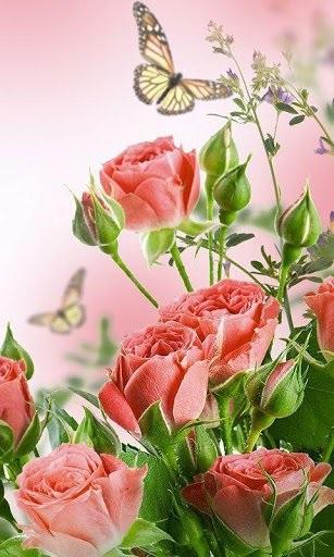 Цветы красивые картинки живые (15)