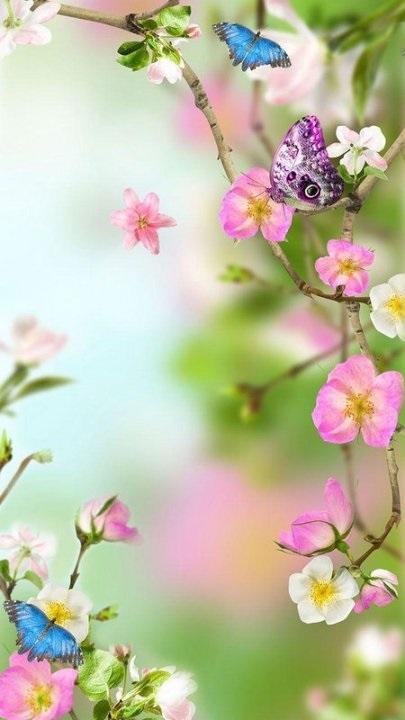 Цветы красивые картинки живые (16)