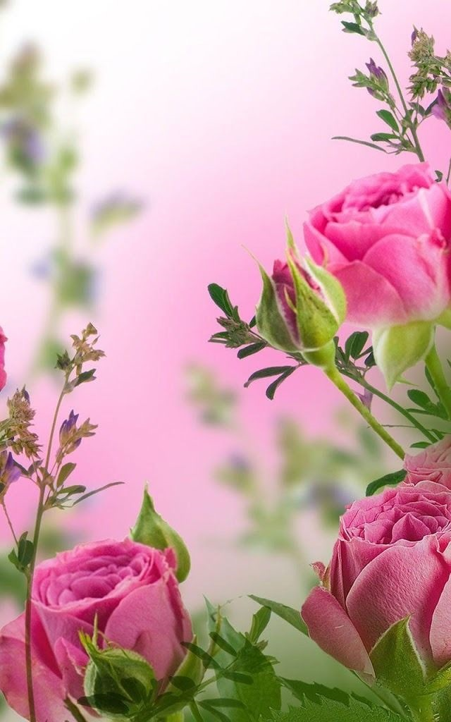 Цветы красивые картинки живые (5)