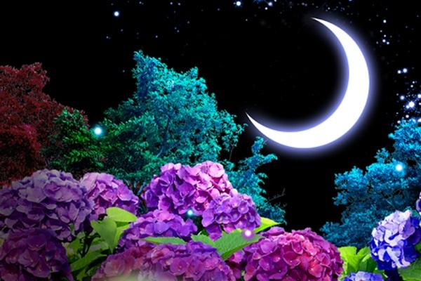 Цветы красивые картинки живые (7)