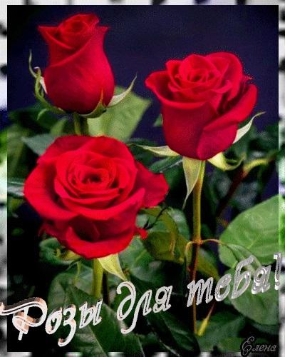 Для тебя розы - самые милые открытки букеты для девушек (25)