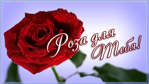 Для тебя розы - самые милые открытки букеты для девушек (9)