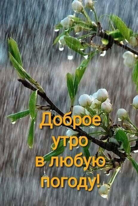 Доброе утро картинки дождь или с дождем для друзей (1)