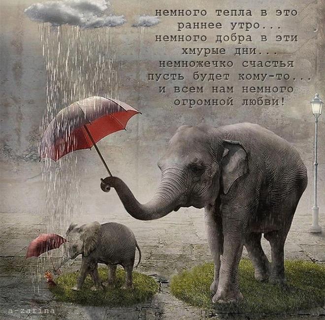 Доброе утро картинки дождь или с дождем для друзей (5)