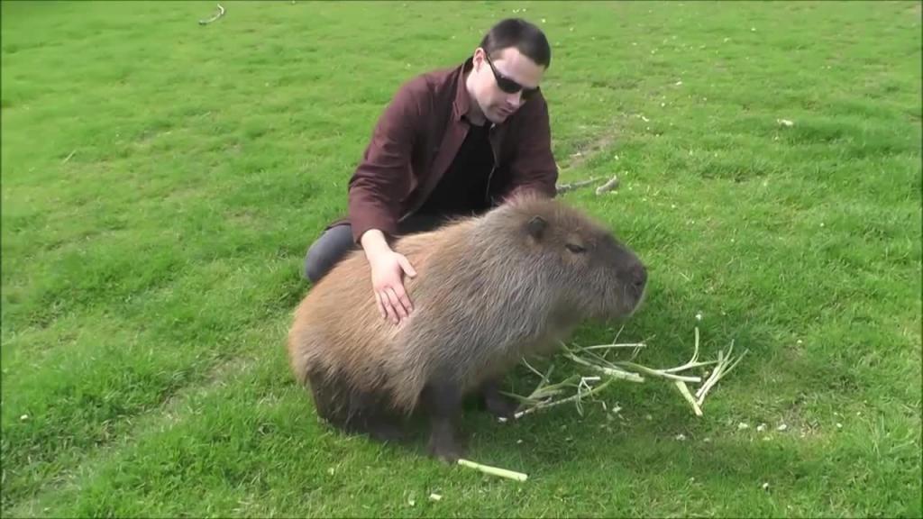 Самый толстый хомяк в мире фото подборочка (16)