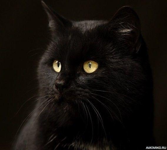 Классные картинки на аву черная кошка (1)
