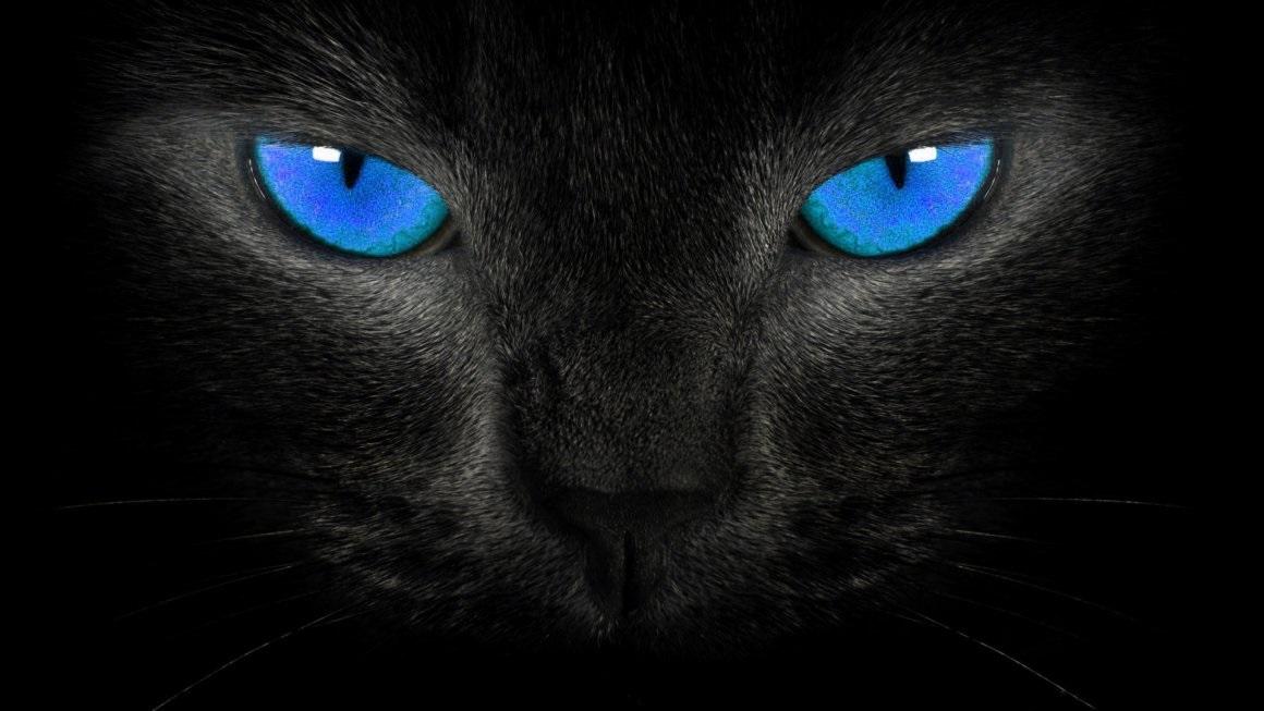 Классные картинки на аву черная кошка (10)