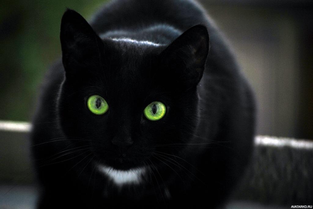 Классные картинки на аву черная кошка (11)