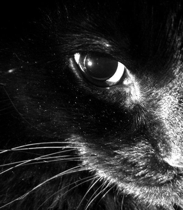 Классные картинки на аву черная кошка (12)