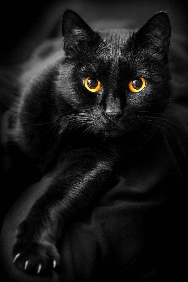 Классные картинки на аву черная кошка (13)