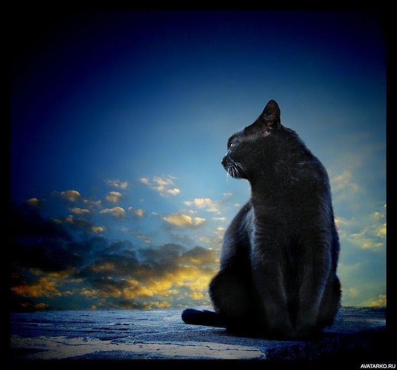 Классные картинки на аву черная кошка (14)