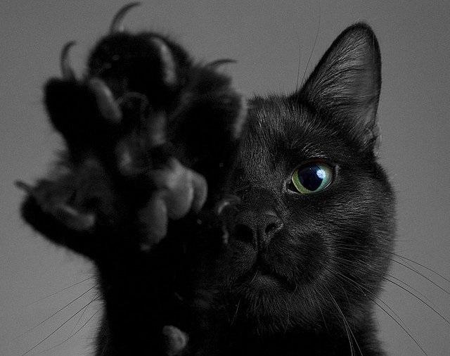 Классные картинки на аву черная кошка (15)