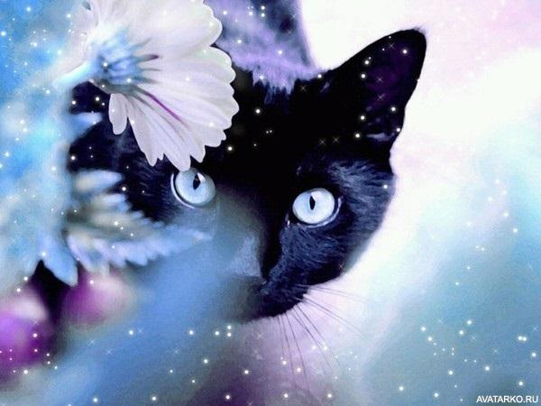 Классные картинки на аву черная кошка (16)