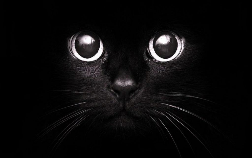 Классные картинки на аву черная кошка (18)