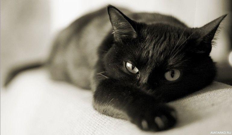 Классные картинки на аву черная кошка (19)