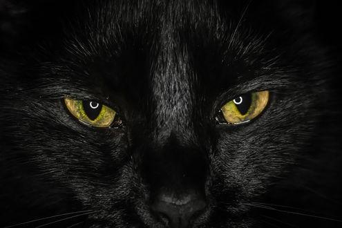 Классные картинки на аву черная кошка (2)