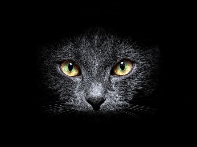 Классные картинки на аву черная кошка (20)