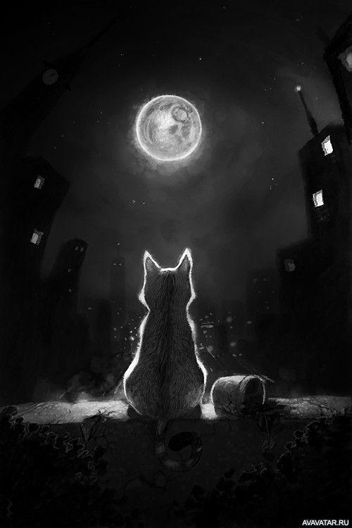 Классные картинки на аву черная кошка (21)